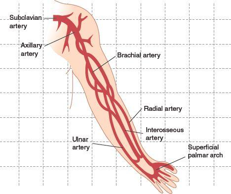 Upper extremity arterial anatomy