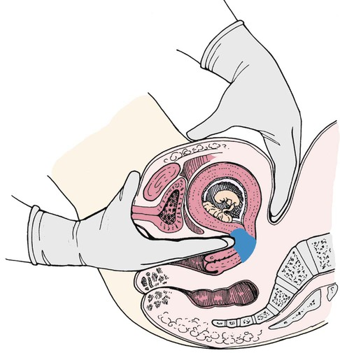 Anatomy and Physiology of Pregnancy