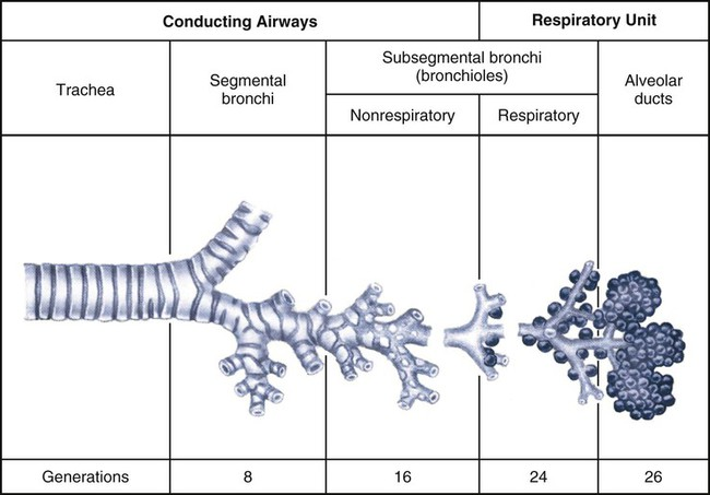Pulmonary Anatomy and Physiology | Nurse Key