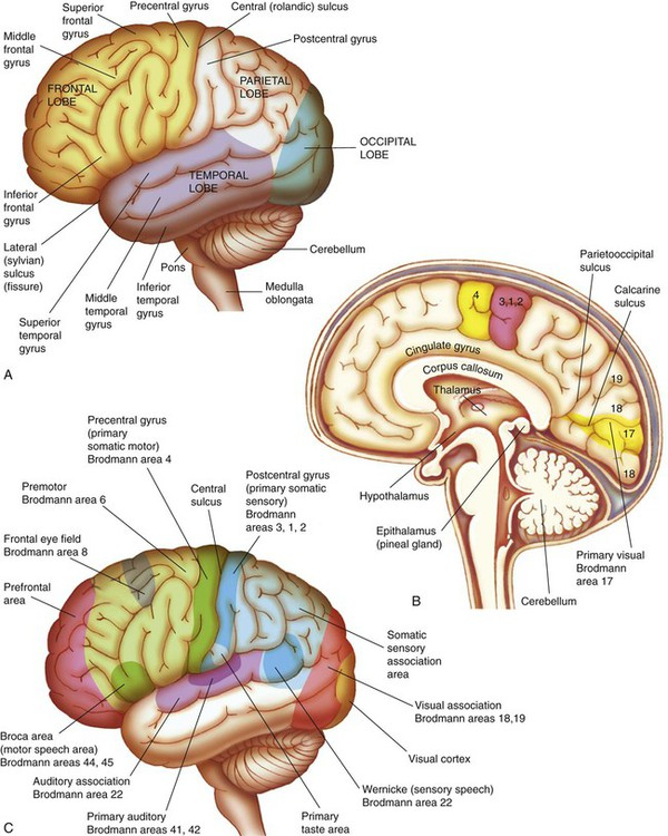 significance of the brain hemisphere and Chapter 1: know yourself — socrates lesson 5: left-brain/right-brain 26 unit 3: foundations for success brain hemispheres the brain splits up functioning and.