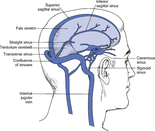 Brain diagram cerebrum