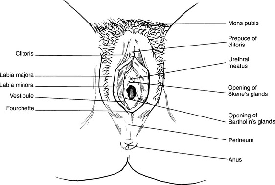Cartography Of The Clit