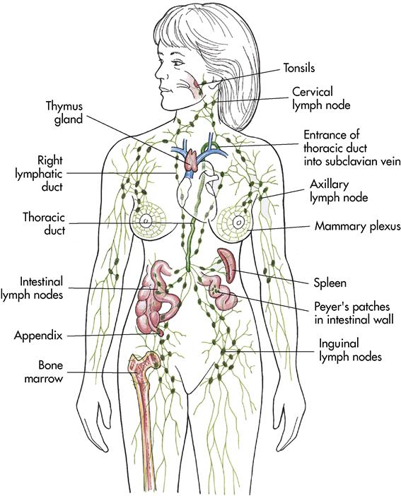 7 Care Of The Patient With A Blood Or Lymphatic Disorder Nurse Key