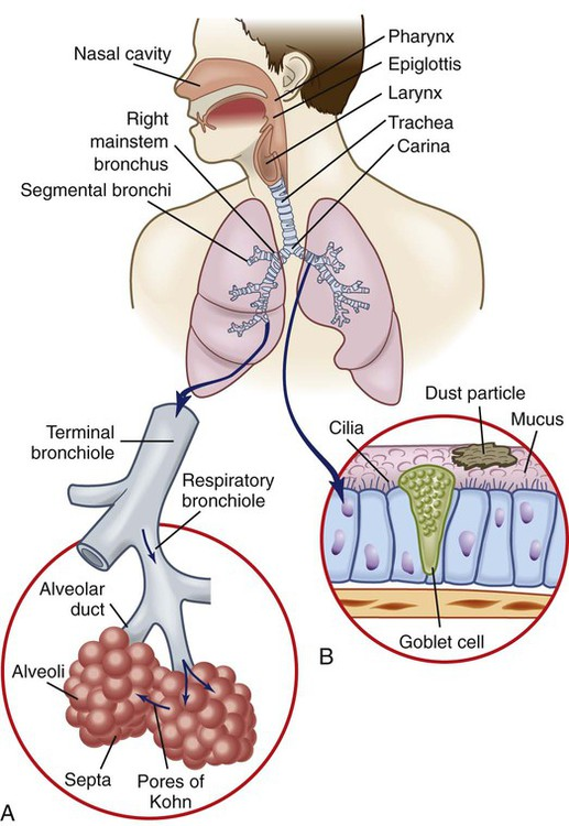 chapter 26 nursing assessment respiratory system Please be aware that we dont have chapter 29 ,38, 41 for this test bank   respiratory system function, assessment, and therapeutic.