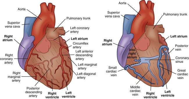 Nursing Assessment Cardiovascular System Nurse Key
