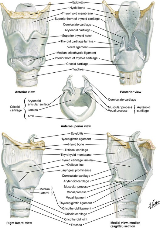 Membranes and Ligaments of the Larynx |Larynx Anatomy Netter