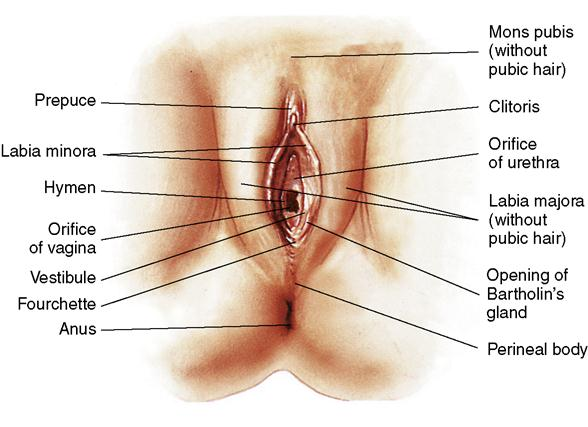 Anus physiology pictures