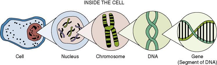 Chromosome gene dna relationship book