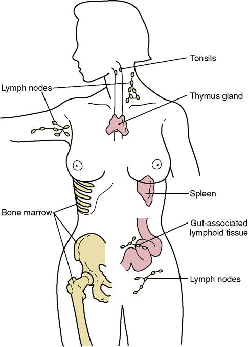 10 The Immune And Lymphatic Systems Nurse Key