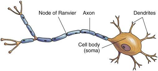 Assessment of the Nervous System | Nurse Key