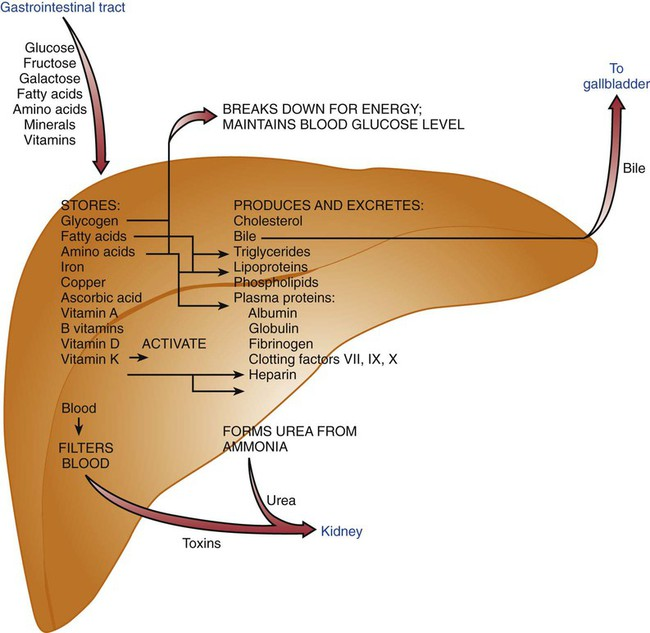 Nutrition For Disorders Of The Liver Gallbladder And Pancreas