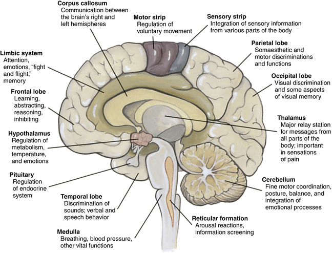 biological psychological functions Human aging: human aging, physiological changes that take place in the human body leading to senescence, the decline of biological functions and of the ability to adapt to metabolic stress.