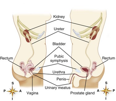Nursing Care of Clients with Urinary/Reproductive System