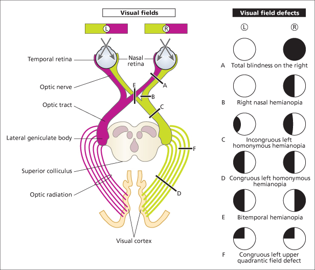 3 Central Nervous System | Nurse Key