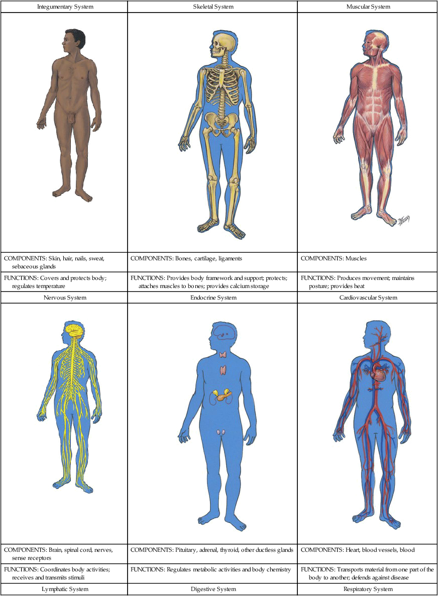 Introduction to Anatomy and Physiology   Nurse Key