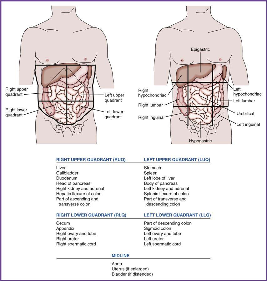 Assisting In Gastroenterology