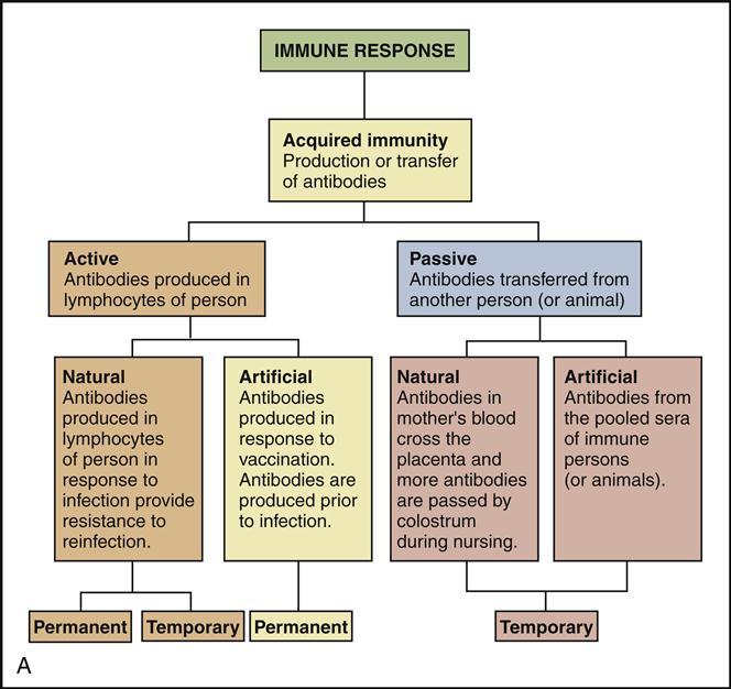 7 Immunology Nurse Key